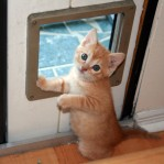 Kitten Wants Out