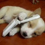 Puppy Cellphone
